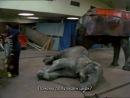 Фильм животных / The Animals Film (1981) Прототип фильма «Земляне».  «Фильм животных» — британский документальный фильм 1981 год